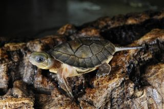 turtle, rare animals