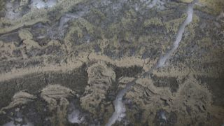 Photomicrograph of stromatolites (golden streaks in the image) from Australia's 3.5-billion-year-old Dresser Formation.