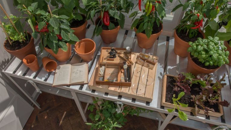 greenhouse storage ideas