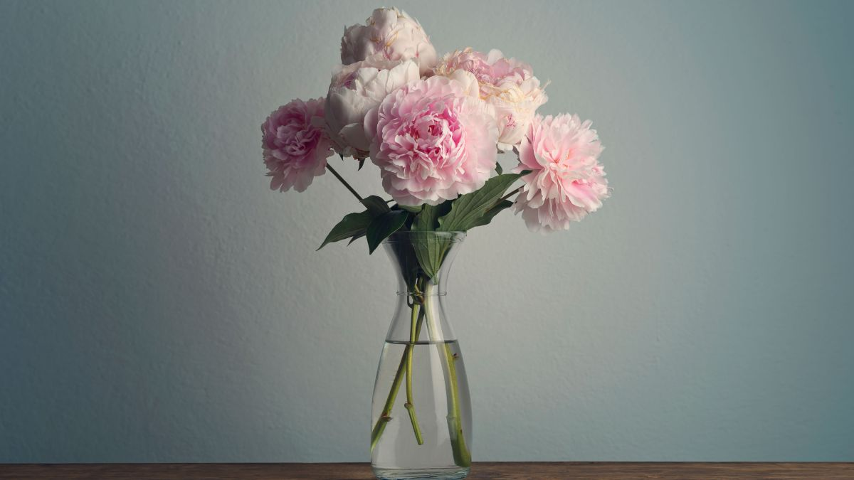 Peonies are back in season – florists reveal their secrets for styling the popular bloom