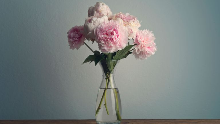 Peony posy in glass vase