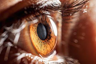 A closeup image of the human eye.