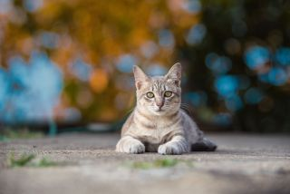 A cat lying on the ground outside.