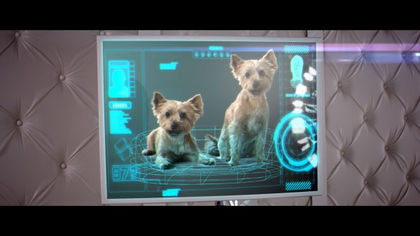 Simon Cowell's dogs Squiddly and Diddly  in the new X Factor trailer