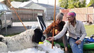 dying dog enjoys snow
