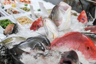 Oceana fraud study mislabeled foods