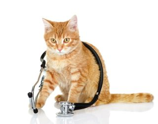 a cat with a stethoscope