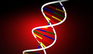 dna strand, telomeres, health
