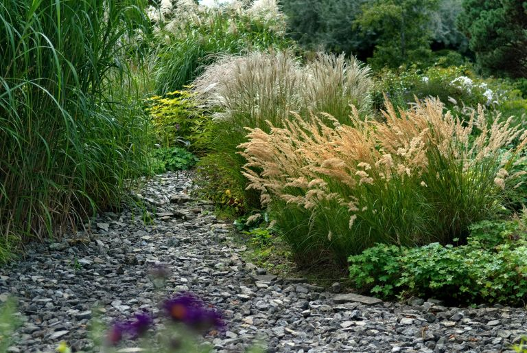 Ornamental grasses in a bed