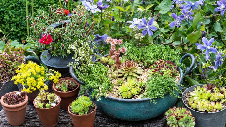outdoor succulents in a plant bowl on a patio - Future