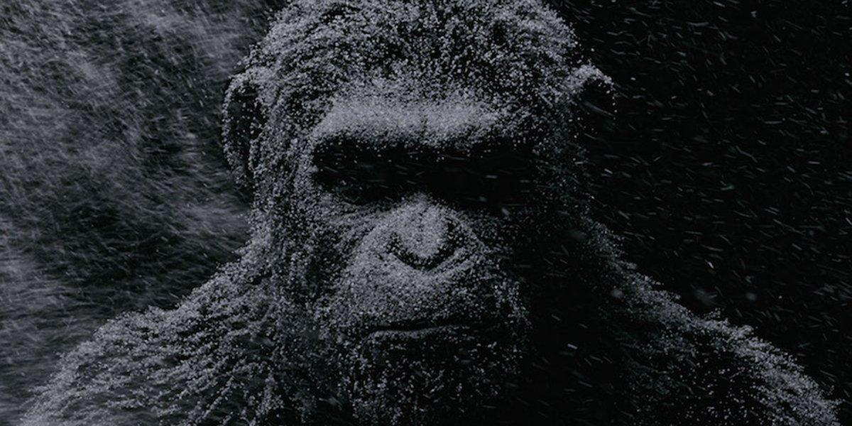 Caesar covered in snow