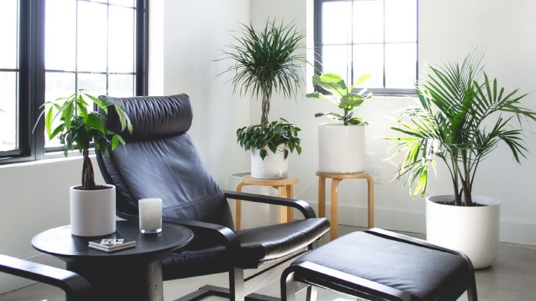 Black leather IKEA POÄNG surrounded by plants
