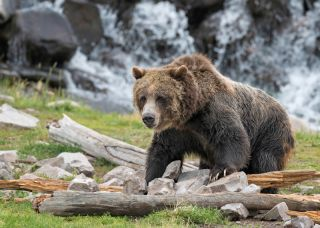 bears, omnivores