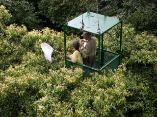 Researchers Dawn Frame and Alexey Tishechkin in the crane gondola netting insects attracted to flowers of the tree Nectandra purpurascens.