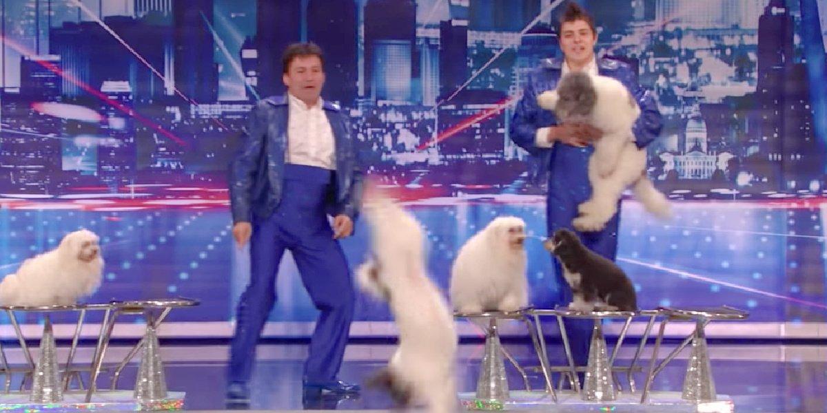 Olate Dogs on America's Got Talent.