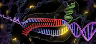Engineering DNA, genetics