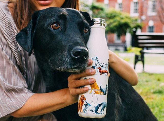 Best stainless steel water bottles