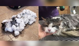 Luckily, Fluffy's owners brought her to the animal clinic before she froze to death.