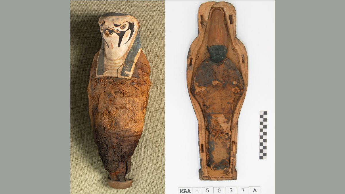 Little ancient Egyptian mummies hold surprises inside … and they aren't human
