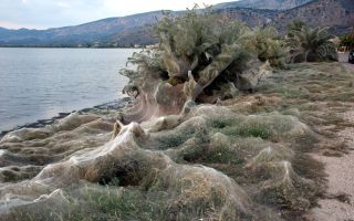 Residents of Aitoliko woke up to an eerie surprise: the beaches were overtaken by these spider webs.