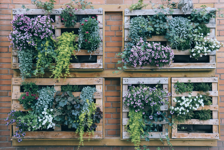 Vertical gardening using pallets and trailing plants