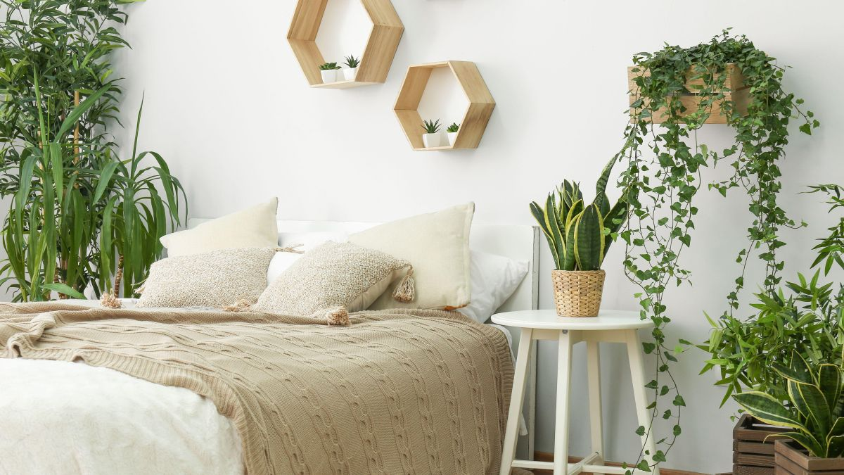 Best plants for bedrooms: 11 leafy options for calm sleeping spaces