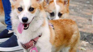 apple airtag dog collar