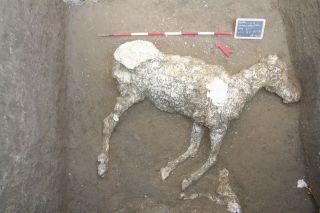 Pompeii horse