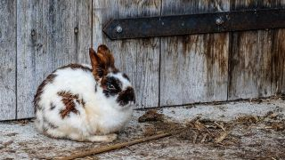 How to care for rescue rabbits