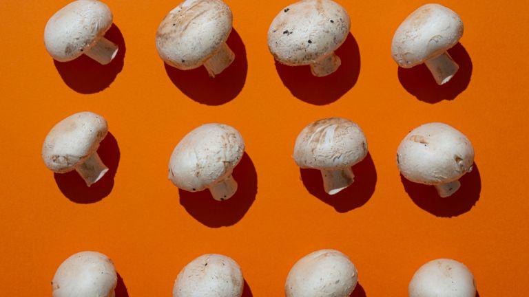 mushrooms on orange background