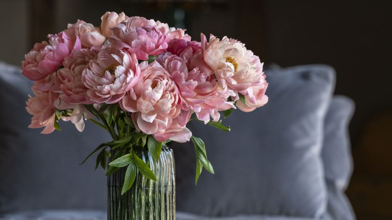 Coral Charm Peonies, Peony style tips
