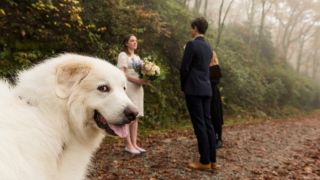 Ring-bearer dog steals the show in couples wedding photo