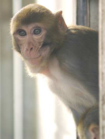 Monkey DNA Points to Common Human Ancestor | Live Science