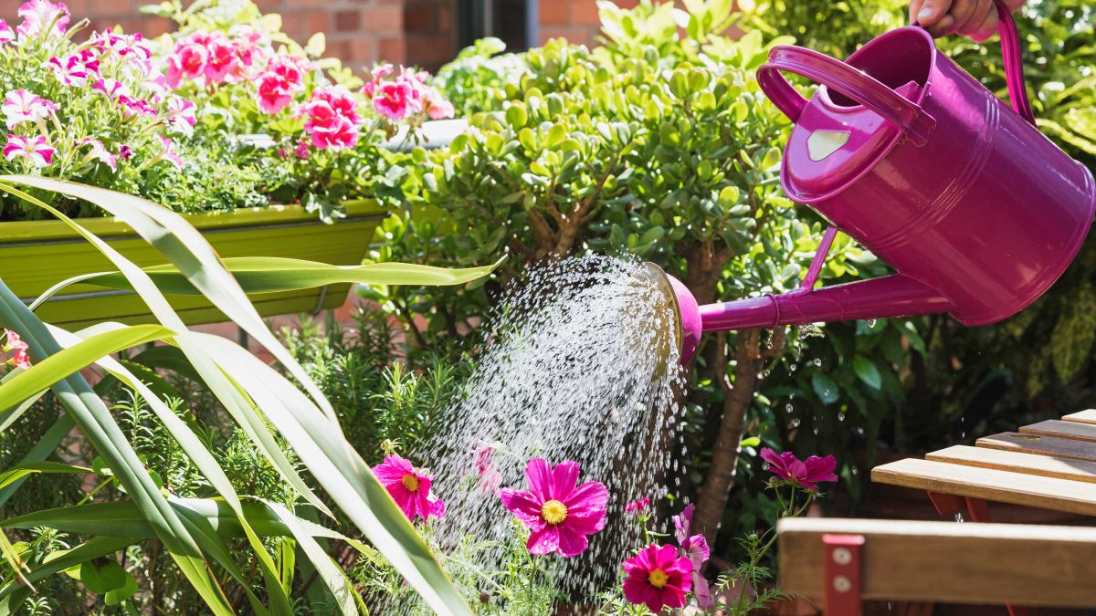 Watering plants: top tips on what to do, when to do it, and which tools to use
