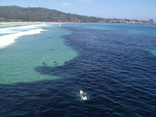 La Jolla anchovies
