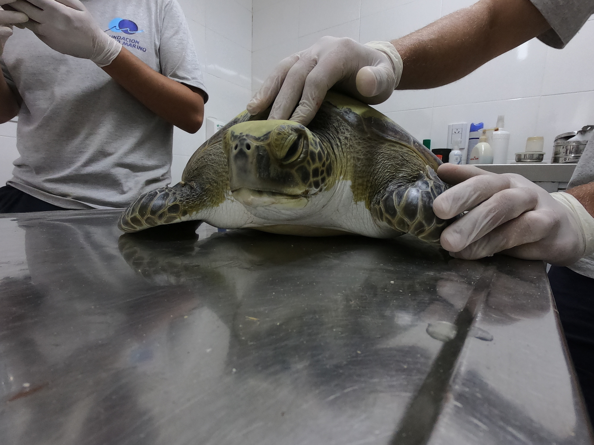 world sea turtle day 2020