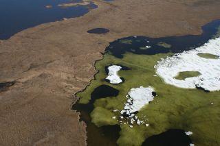 Algal bloom in arctic pond
