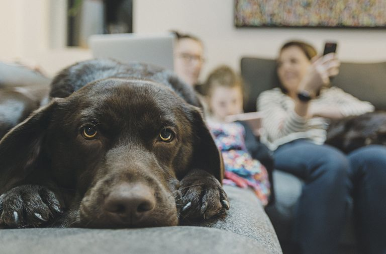 study reveals dogs experience puberty symptoms
