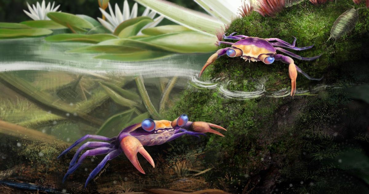Tiny 'immortal' crab entombed in amber discovered in a first of its kind