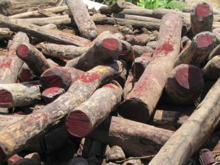 rosewood, hardwood, natural resources