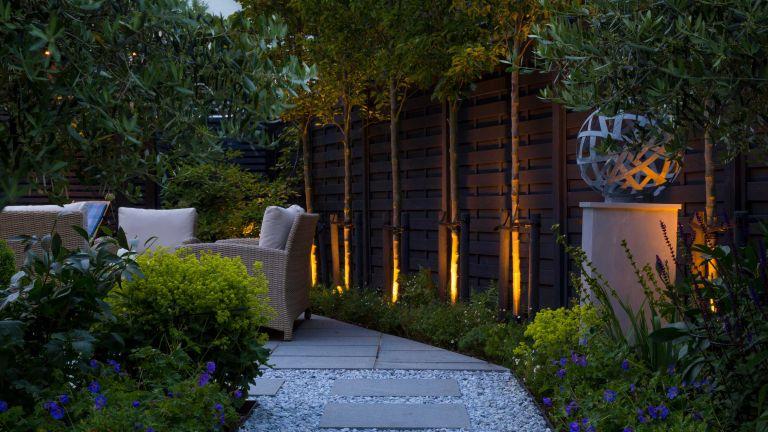 path lighting ideas: Pyrus calleryana 'Chanticleer' trees with uplighting