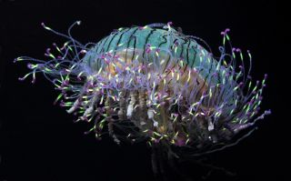 An adult flower-hat jelly