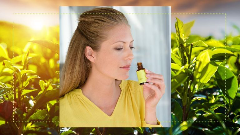 tea tree oil main collage of woman sniffing essential oil against tea tree leaves in background