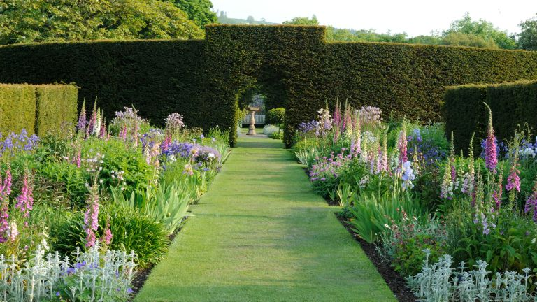Deep flower bed ideas planted with tall pink foxgloves, either side of a lawn leading to a box hedge.