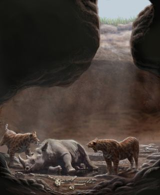 sabertooth cats circle a rhinoceros carcass in a cave