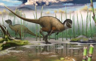 New Feathered Dinosaur Species