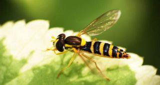 wasp-leaf-100715-02