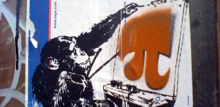 chimpanzee, painting pi, pi