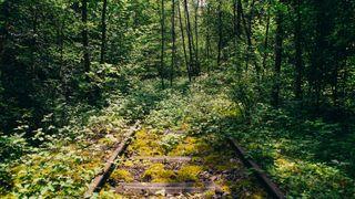 overgrown railroad tracks through a dense forest