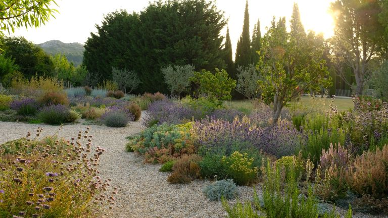 An example of how to plan a dry garden showing a gravel path with Mediterranen planting